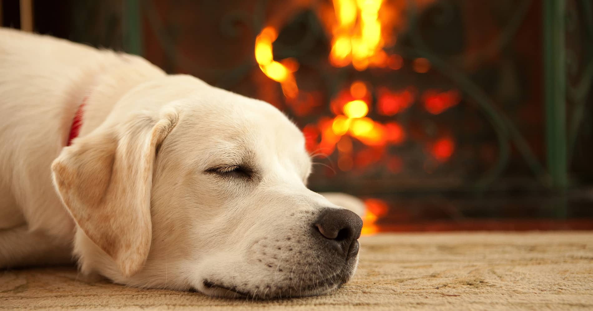 Crown Pointe dog sleeping by the fire