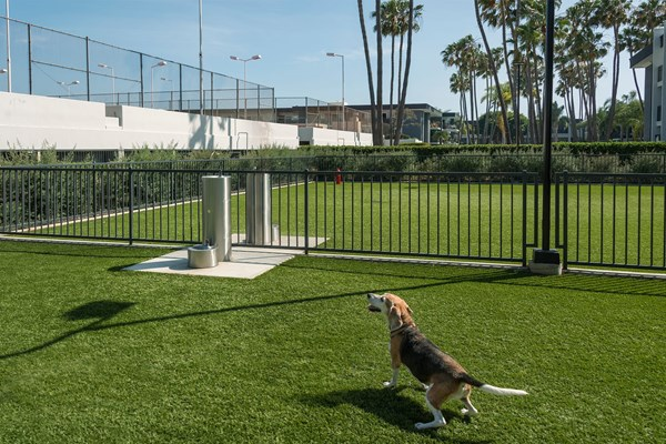 Eight 80 Newport Beach Dog Park
